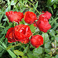 Flickr - Duncan~ - More Roses.jpg