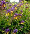 Flickr - Per Ola Wiberg ~ mostly away - more wild flowers.jpg