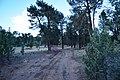 Flinders Ranges SA 5434, Australia - panoramio (96).jpg