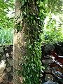 Flora Indonesia 009-MPA.jpg