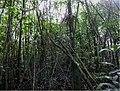 Floresta paludosa em Bauru, SP.jpg