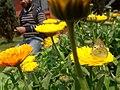 Flower20180321 105651.jpg