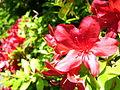 Flowers (3557117840).jpg