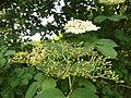 Flowers of Kamiennik (2).jpg