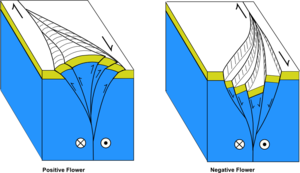 Strike-slip tectonics - Flower structures developed along minor restraining and releasing bends on a dextral (right-lateral) strike-slip fault