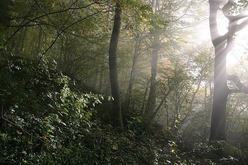 File:Fog forrest frickberg.jpg
