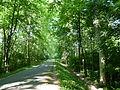 Forêt de la Robertsau-Allée de la Digue.JPG
