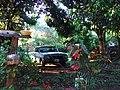 Ford Falcon 1982.jpg