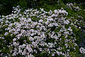 Forest-wildflowers-bush - West Virginia - ForestWander.jpg