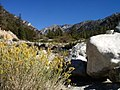 Forest Falls, San Bernardino NF (3721660714).jpg