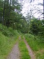 Forest Track - geograph.org.uk - 1381155.jpg