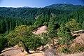 Forest Views, Rogue River-Siskiyou National Forest (37110552045).jpg
