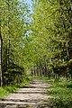 Forest Walkway (109144123).jpeg
