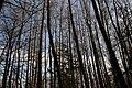 Forest in Halmstad.jpg