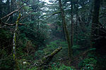 Forest in Yakushima 45.jpg