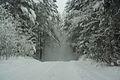 Forest near Ob river in Altai Region 34.JPG