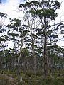 Forrest Bruny Island.jpg