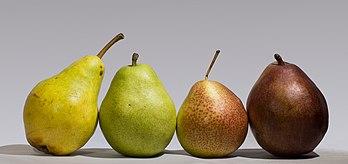Quatre variétés de poires: Bartlett (ou Williams), d'Anjou, Forelle, Bartlett rouge.  (définition réelle 4426×2080)