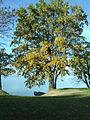French oak automn.jpg