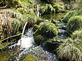 Fresh water in the Forest - April 2015 - panoramio.jpg