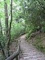 Furzebrook, steps to Blue Pool - geograph.org.uk - 823162.jpg
