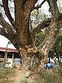 FvfAringayLaUnion9487 23.JPG