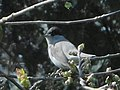 GT First Blackcap of 2020.jpg