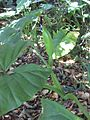 Gardenology.org-IMG 0673 rbgs10dec.jpg