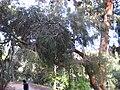 Gardenology.org-IMG 2580 ucla09.jpg