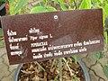 Gardenology.org-IMG 7737 qsbg11mar.jpg
