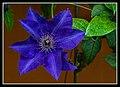 Gardens by the Marina Bay - Dome Flowers-09 (8322721931).jpg