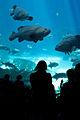 Georgia Aquarium (4662883893).jpg
