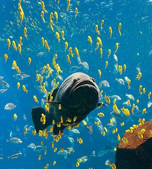 Knochenfische aus