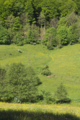 Gersfeld Sandberg Obernhausen SCI 555578052 Fulda Stream.png