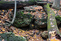 Gfp-wisconsin-blue-mound-state-park-log-over-rocks-on-streambed.jpg