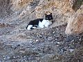 Ghi, pettingzoo (kitty resting at main entrance)2.jpg