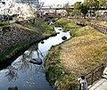 Gifu Sakura.jpeg