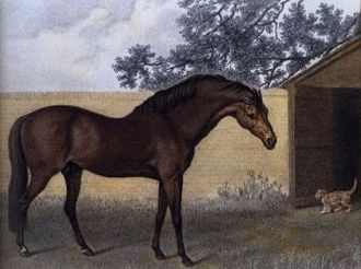 Godolphin Arabian - The Godolphin Arabian, by George Stubbs