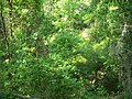 Gold Head Branch SP ravine01.jpg