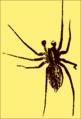 Golden Spider.png