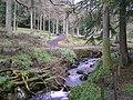 Gortin Glens Forest Park (7) - geograph.org.uk - 1711713.jpg
