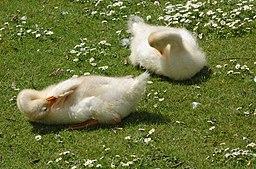 Goslings-Verulamium-Park-20050523-010
