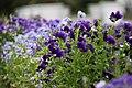 "Gradina Botanica ""Vasile Fati"" (4653344051).jpg"