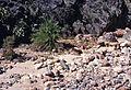 Grand Canyon Flood of 1966 Bright Angel Canyon 0336 - Flickr - Grand Canyon NPS.jpg