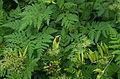 Graphosoma lineatum - Parc Floral.jpg