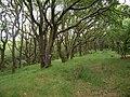 Grassy woodland track - geograph.org.uk - 518561.jpg