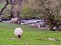 Great Ghyll, West Scrafton - geograph.org.uk - 1077753.jpg