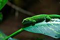 Green Gecko (1349256667).jpg