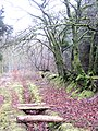Green Trees - Cookworthy Forest - March 2012 - panoramio.jpg