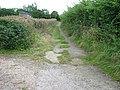 Green lane above Coombe Barn - geograph.org.uk - 1479207.jpg